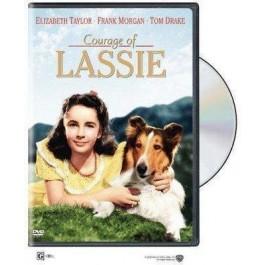 Fred M Wilcox Hrabar Kao Lassie DVD
