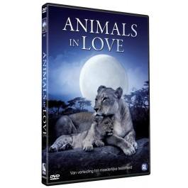 Movie Animals In Love DVD